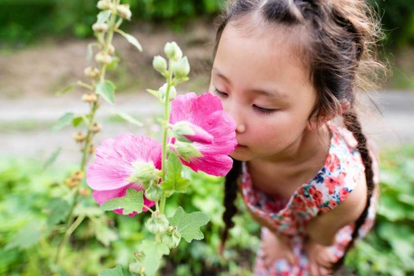 Smelling and olfactory sensoryactivities for children with Autism